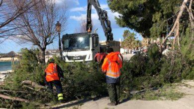 Photo of Orkanska bura polomila je i iščupala stabla po cijelom otoku Viru, izazvala je oštećenja na obiteljskim i vikend kućama